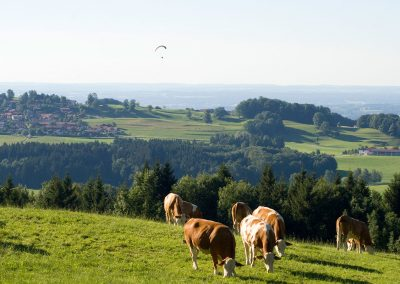 Aussicht von der Pallauf-Alm auf Steinkirchen