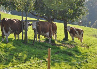 Unsere Tiere auf dem Bauernhof